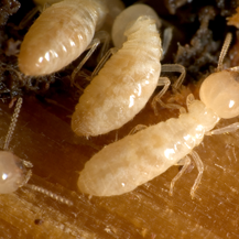 termite control  North Middletown NJ
