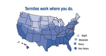 NJ Termite Control New Jersey Termite Inspection Ozanecom - Us termite map